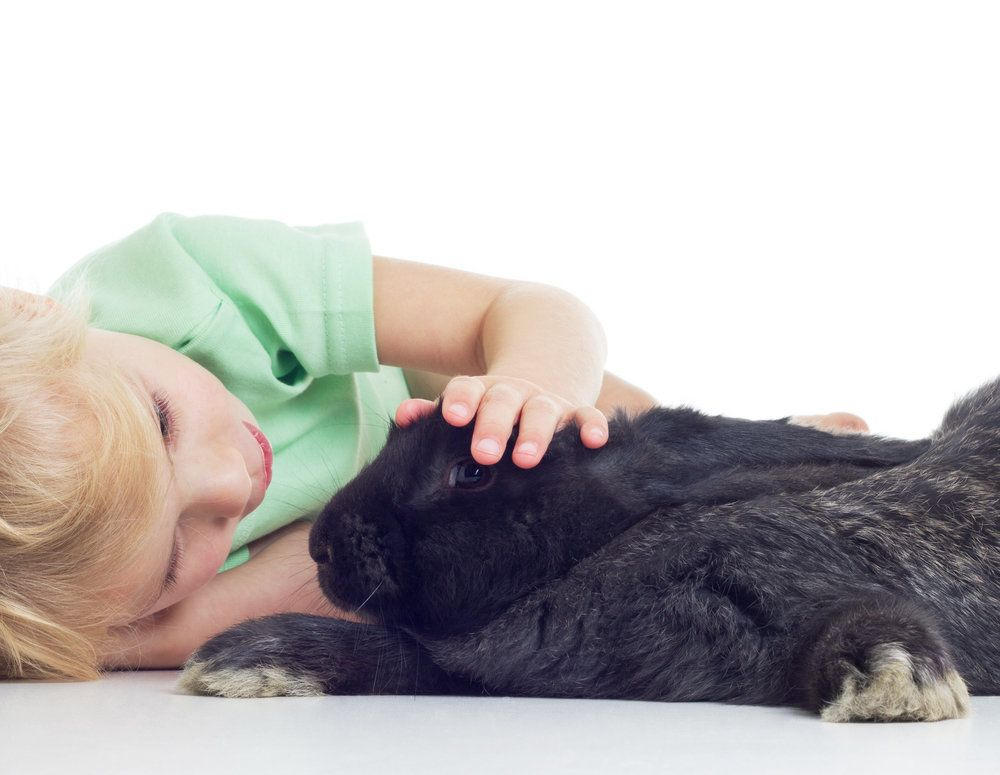 Child laying on side petting pet bunny
