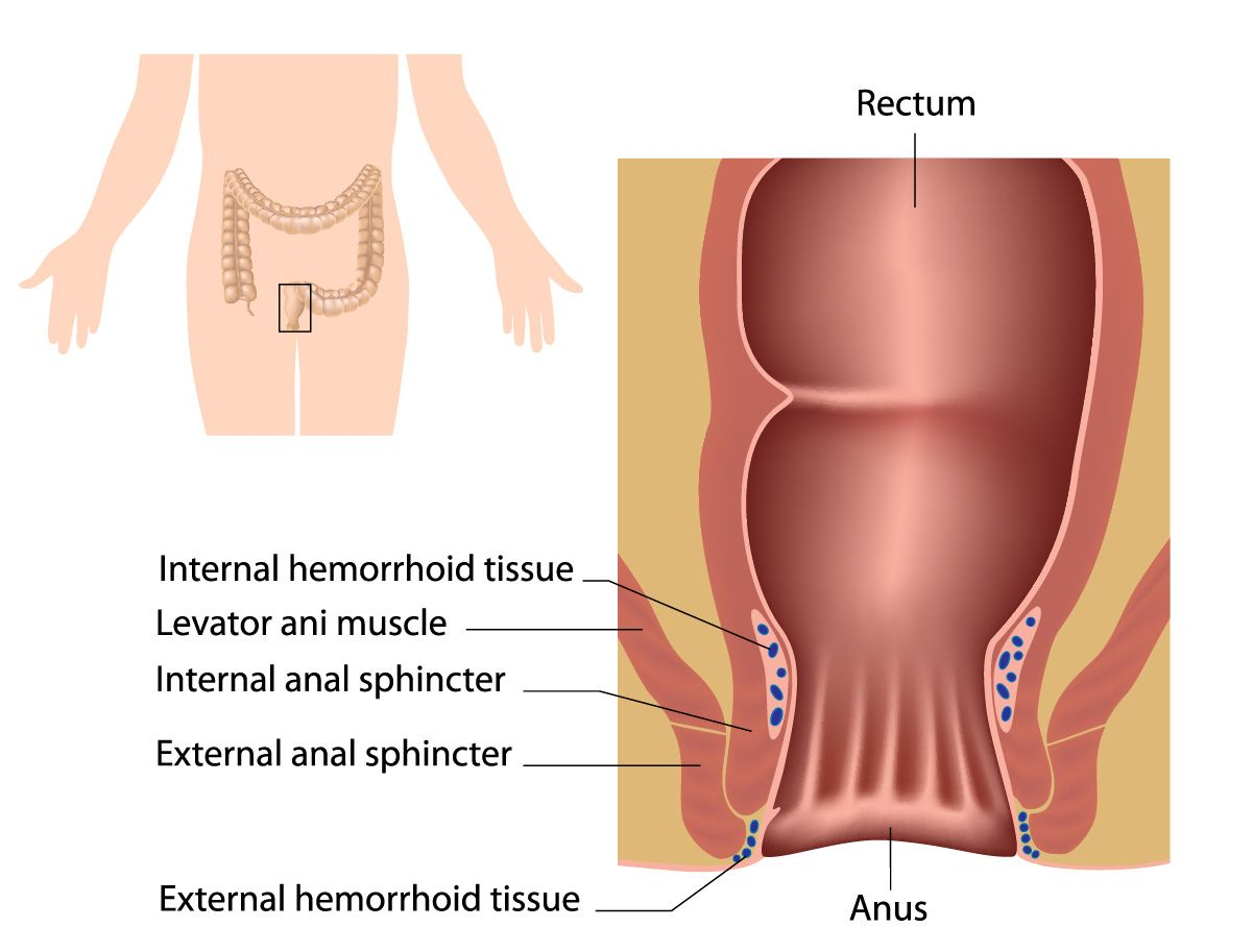 A diagram of the human rectum and anus.
