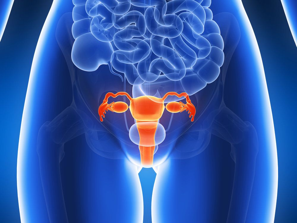 Fallopian tubes and the female reproductive system