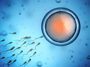 Microscope-style image of sperm fertilizing an egg