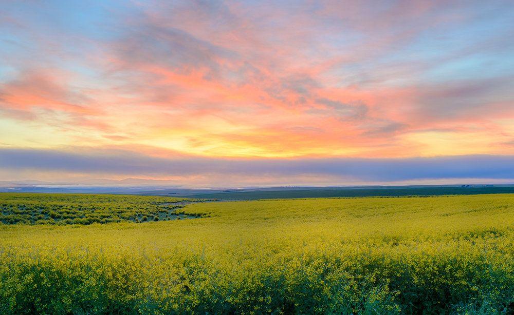 Field in Blackfoot