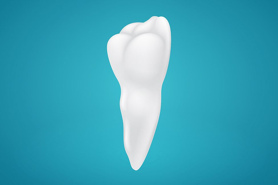 A tooth, from root to crown