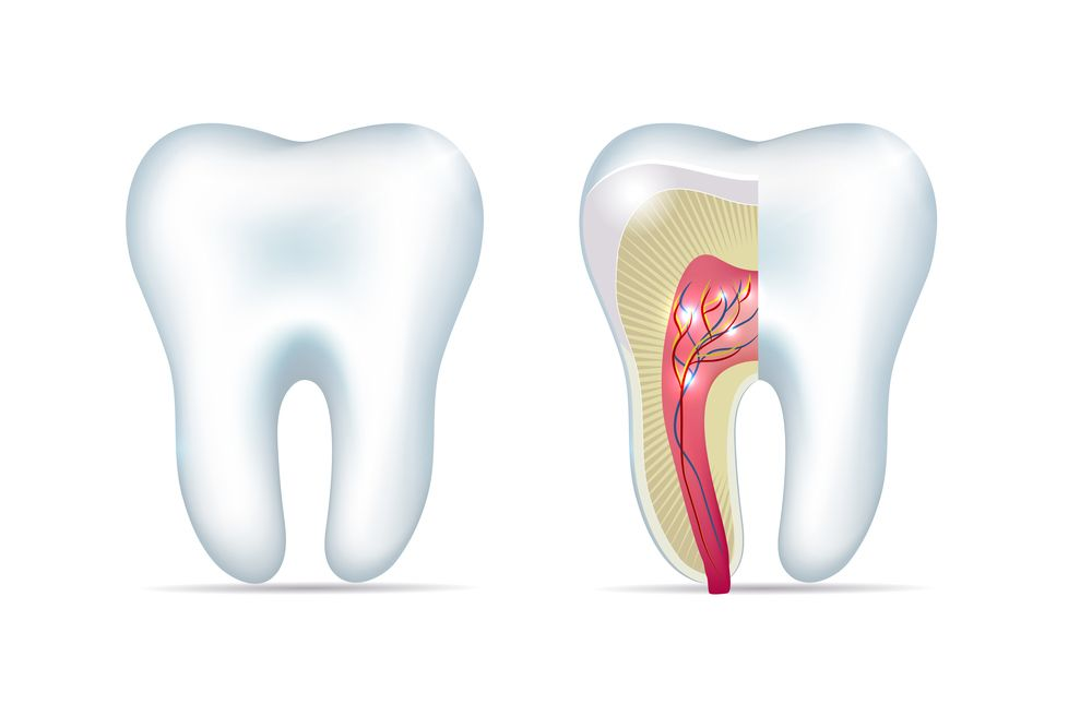 A graphic of two teeth, one with part of the internal structures showing