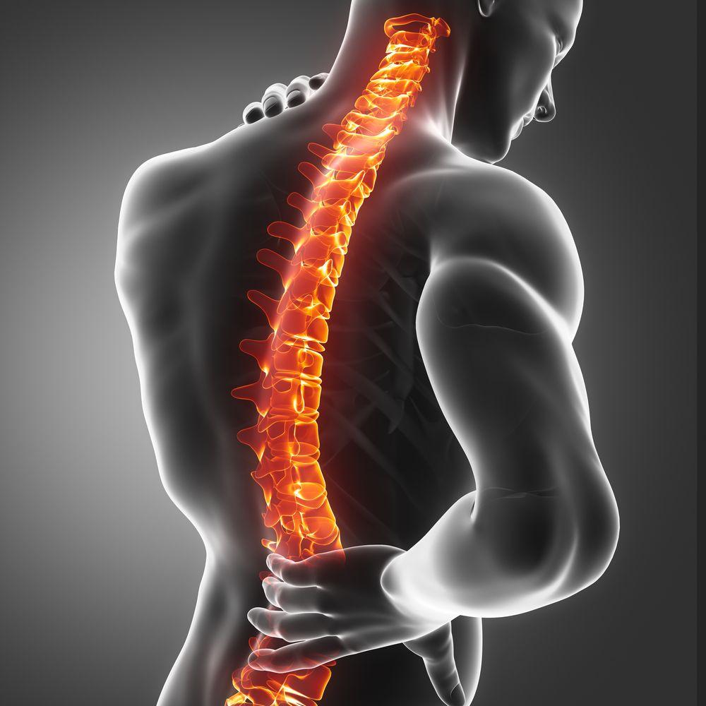 A spine
