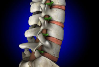 Digital illustration of spine and spinal cord