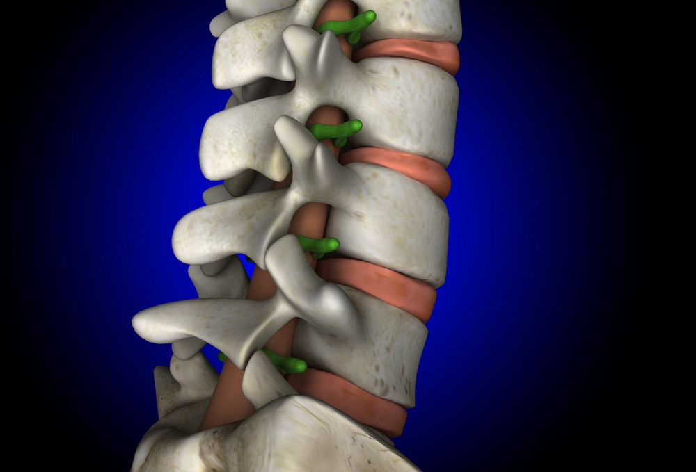 Illustration of spine