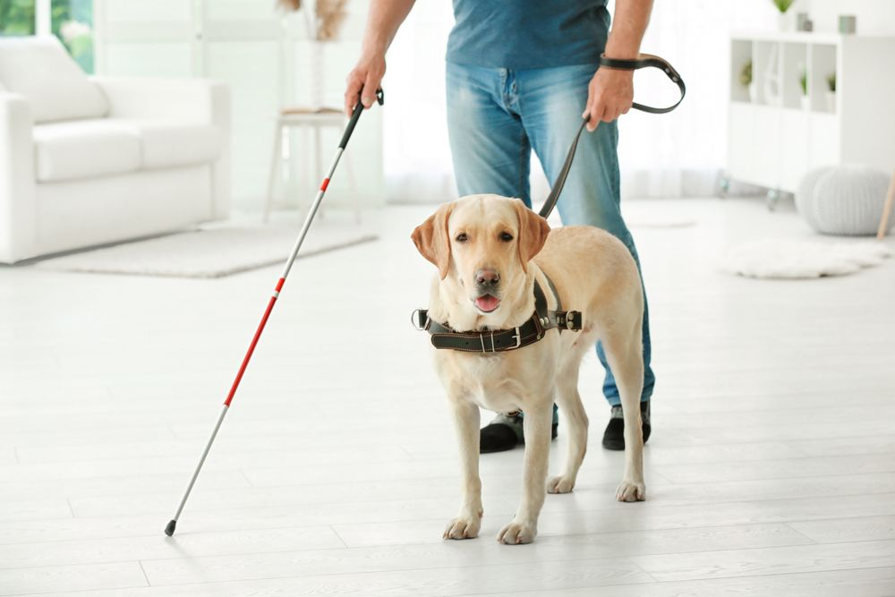 Man with cane and seeing eye dog
