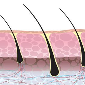 An illustrated graphic of individual hair follicles