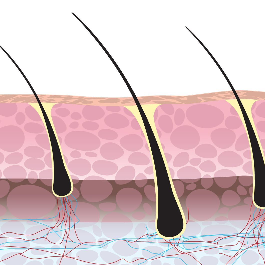 Illustration of hair follicles