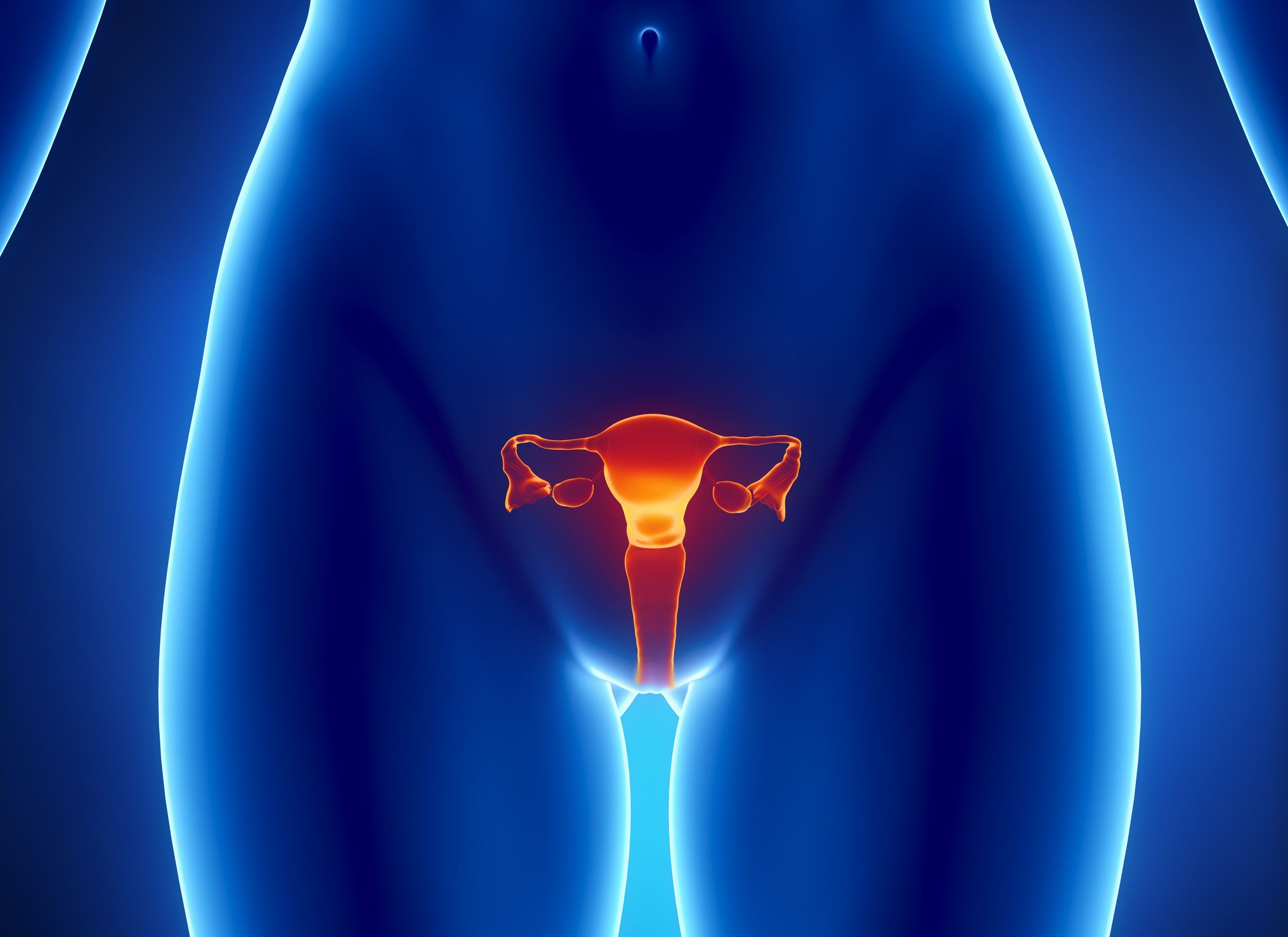 Digital illustration of a woman's reproductive system