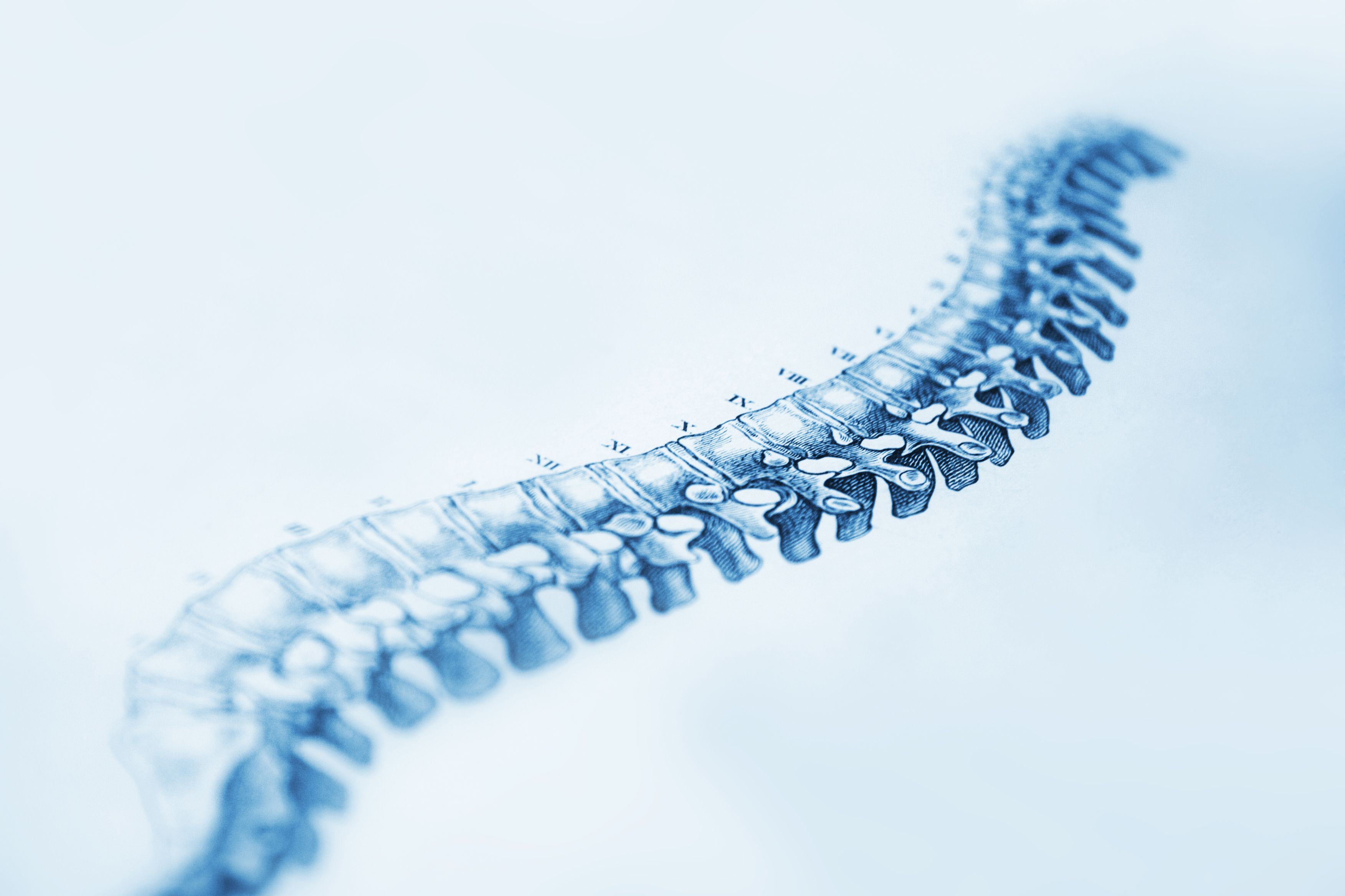 An image of the human spinal column