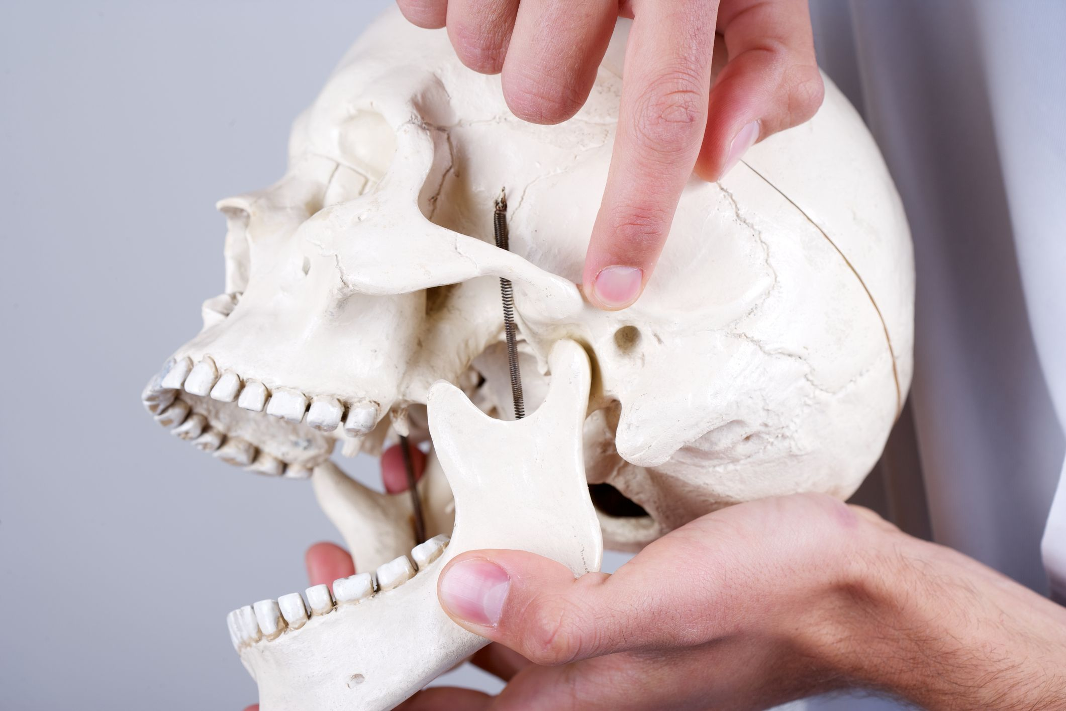 Photo of a hand pointing at the TMJ on a skull