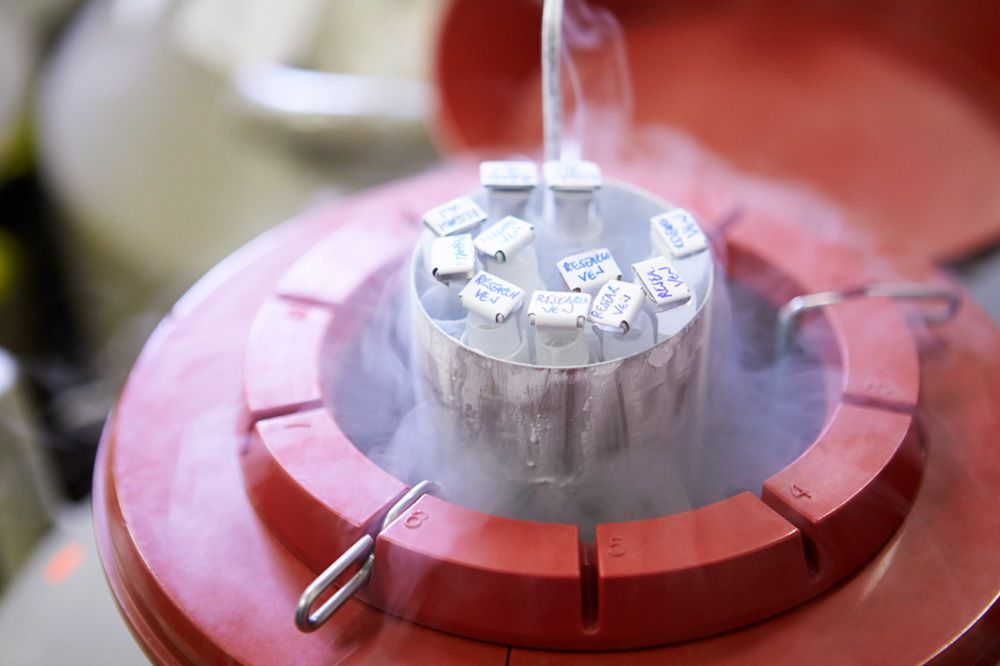 Cryofreezing for fertility preservation