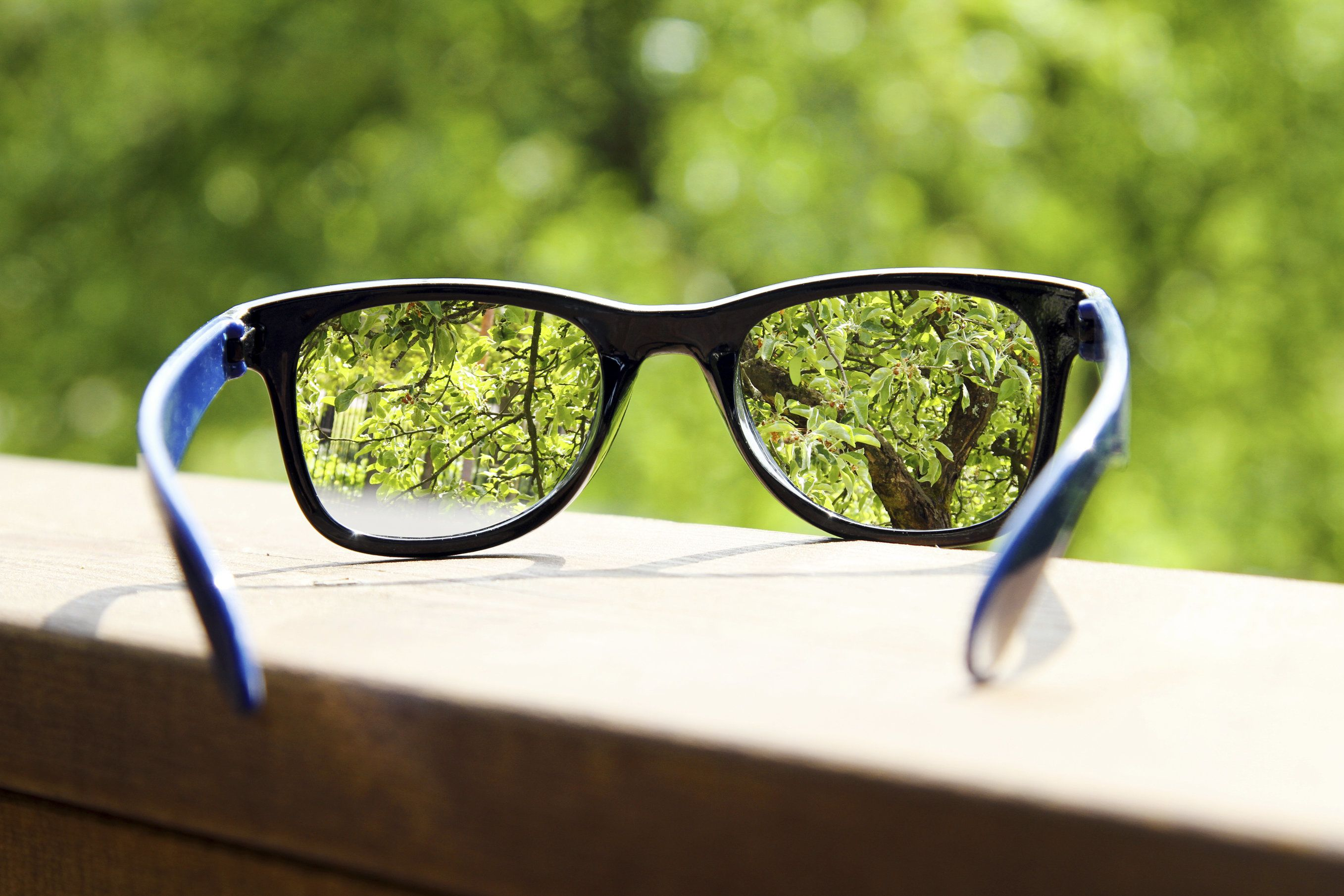 pair of eyeglasses focused on trees