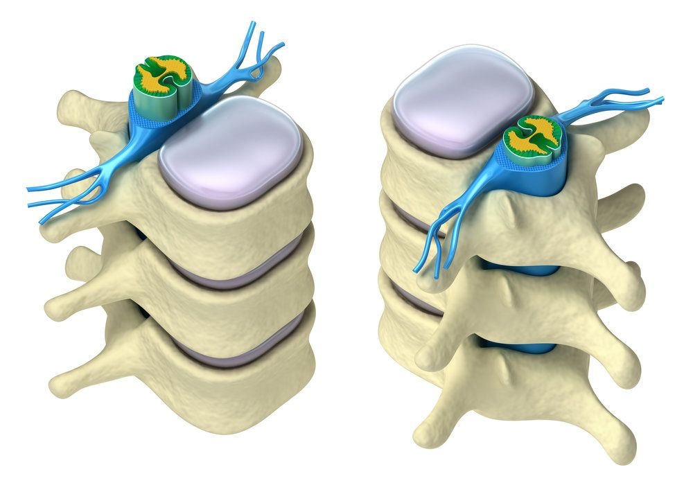Illustrations of the front and back of the spinal cord