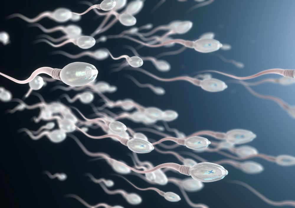 Healthy sperm swimming