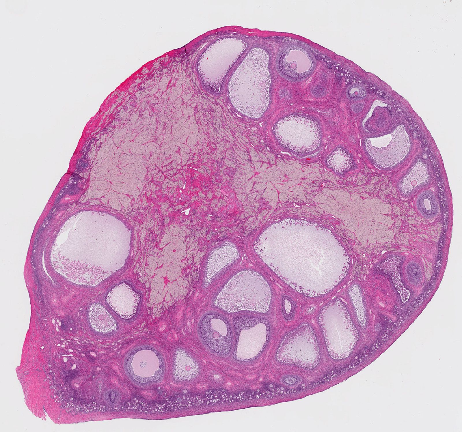 Microscopic image of embryo