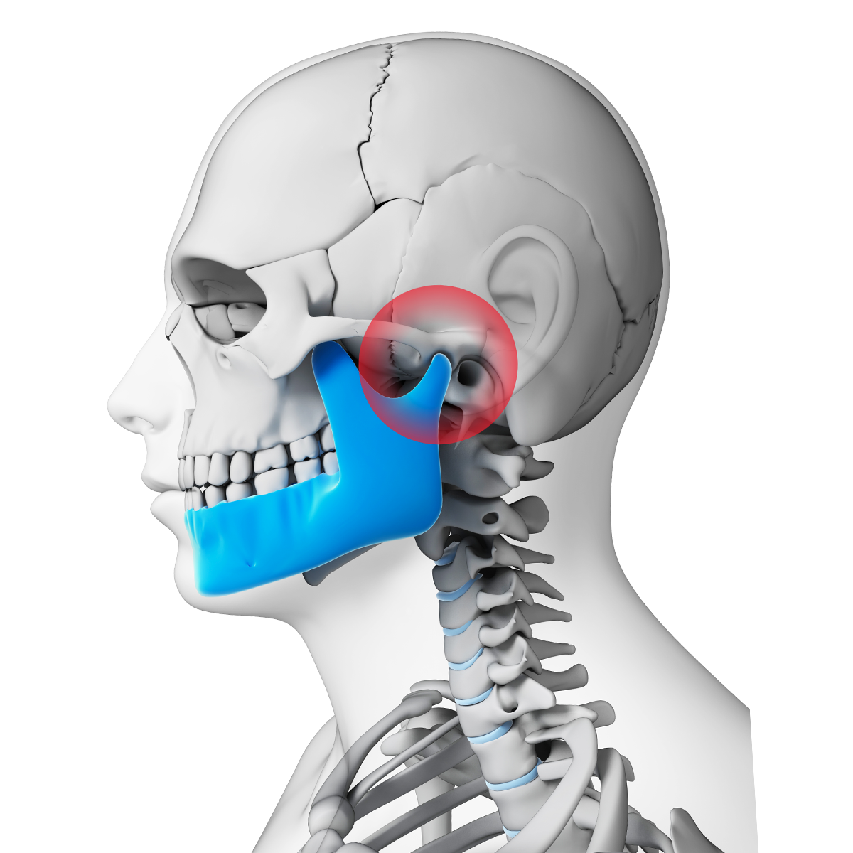 Digital image highlighting the TMJ